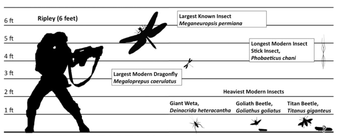 Image result for giant insect size
